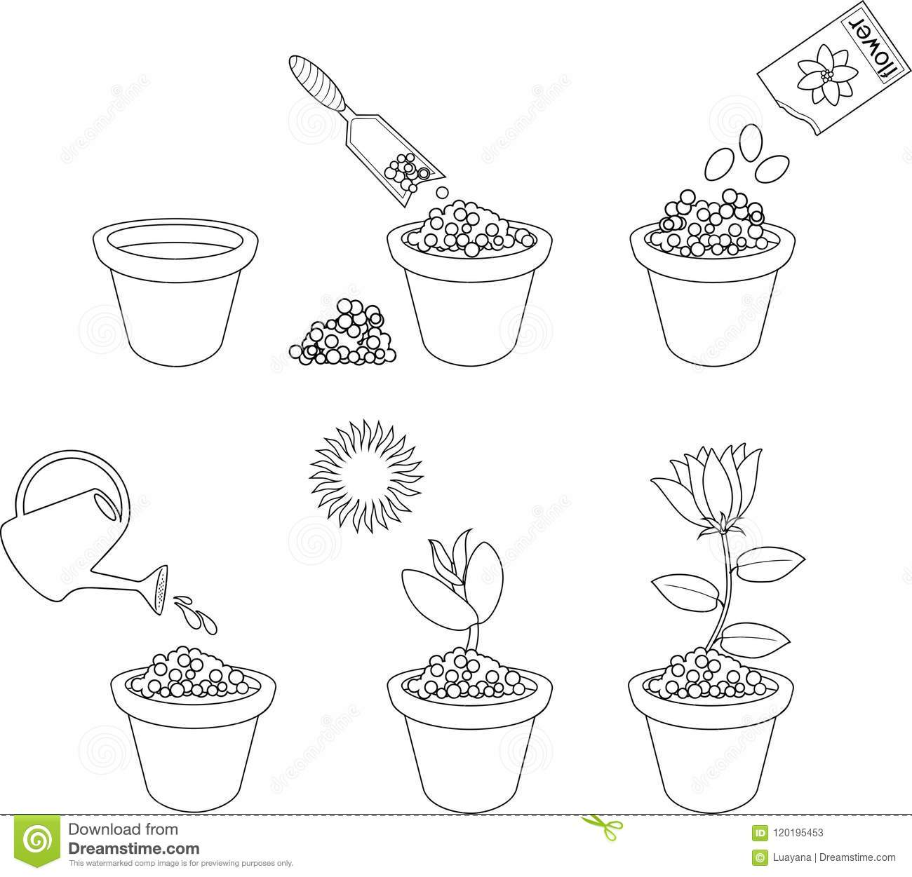 Coloring Page Instructions On How To Plant Flower In Six