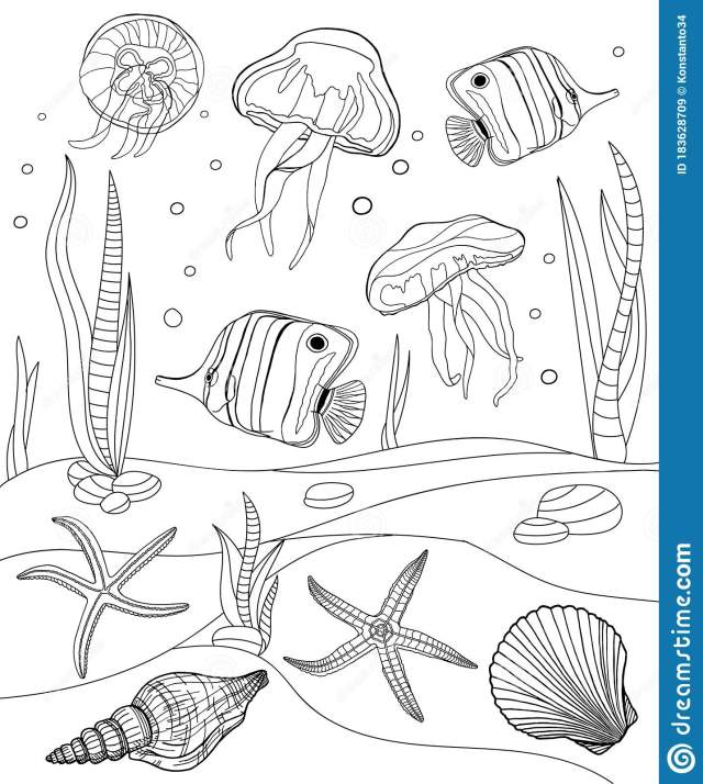 Coloring Pages. Tropical Fish, Seashell, Jellyfish And Starfish
