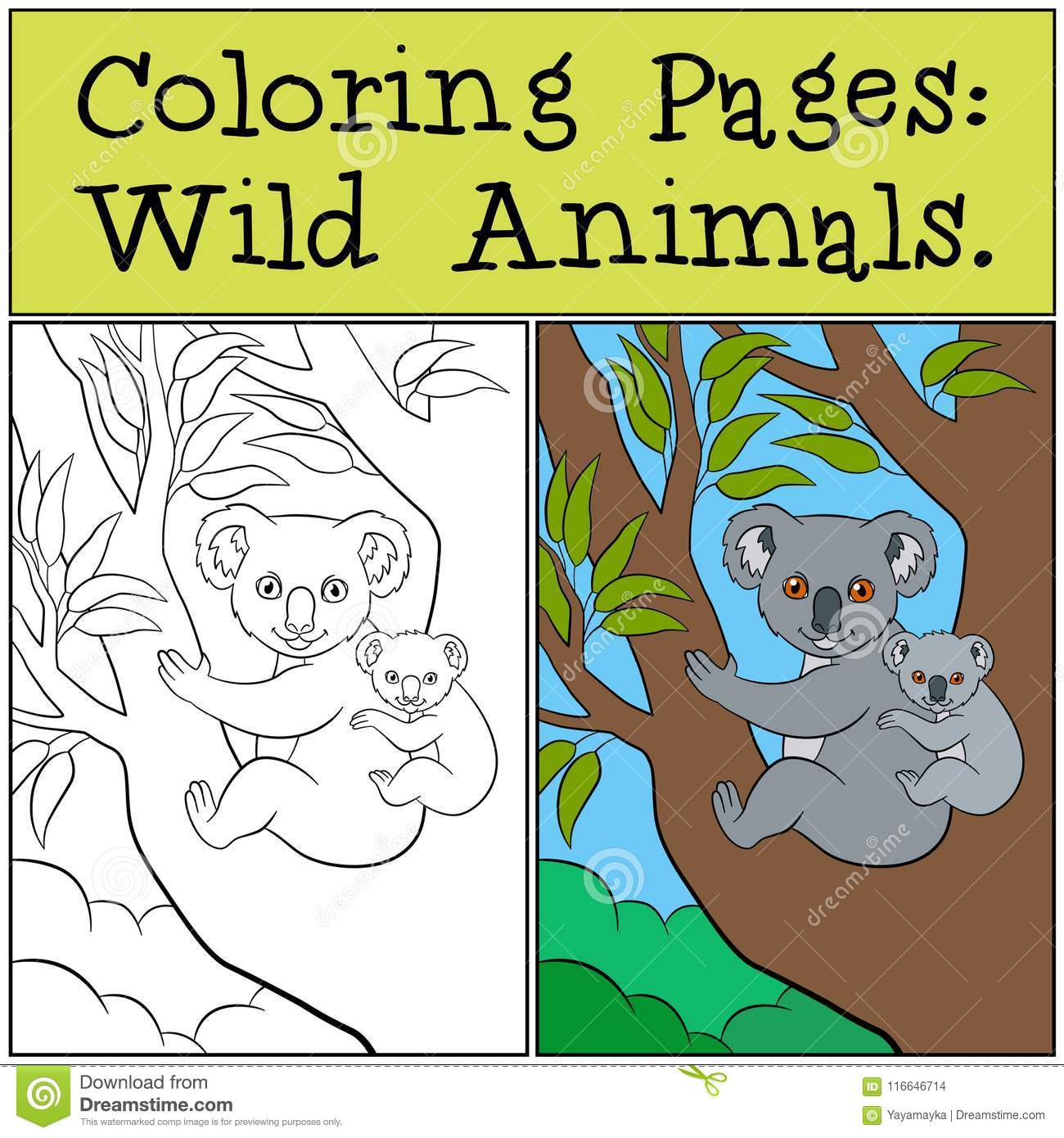 Coloring Pages Wild Animals Mother Koala With Her Cute