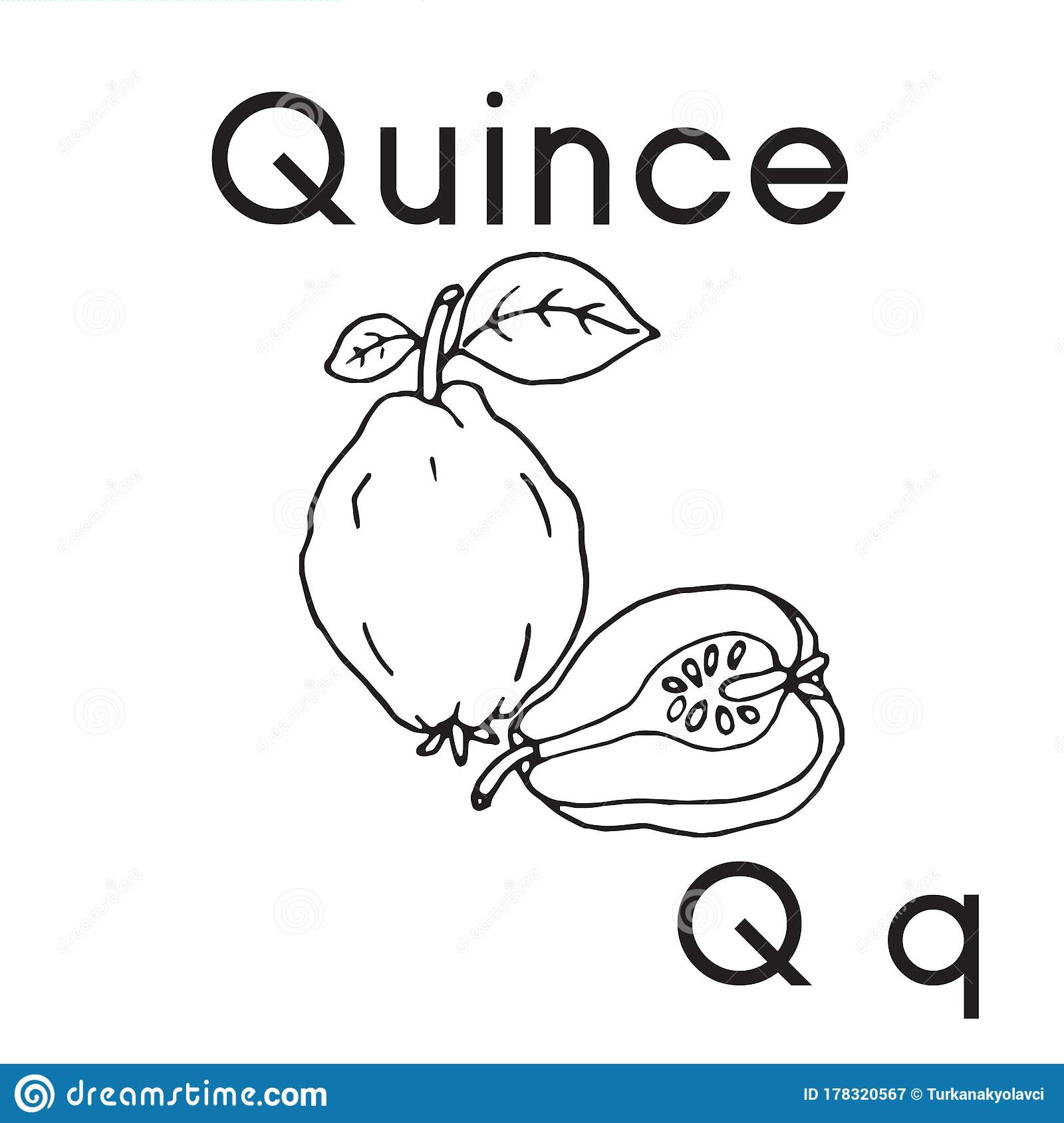 Pictures For Letter Q Cartoon Vector