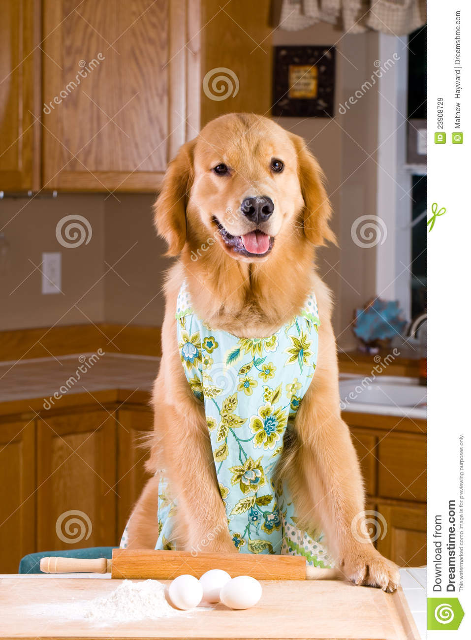 Cooking Dog Stock Image Image Of Homemade Kitchen Board