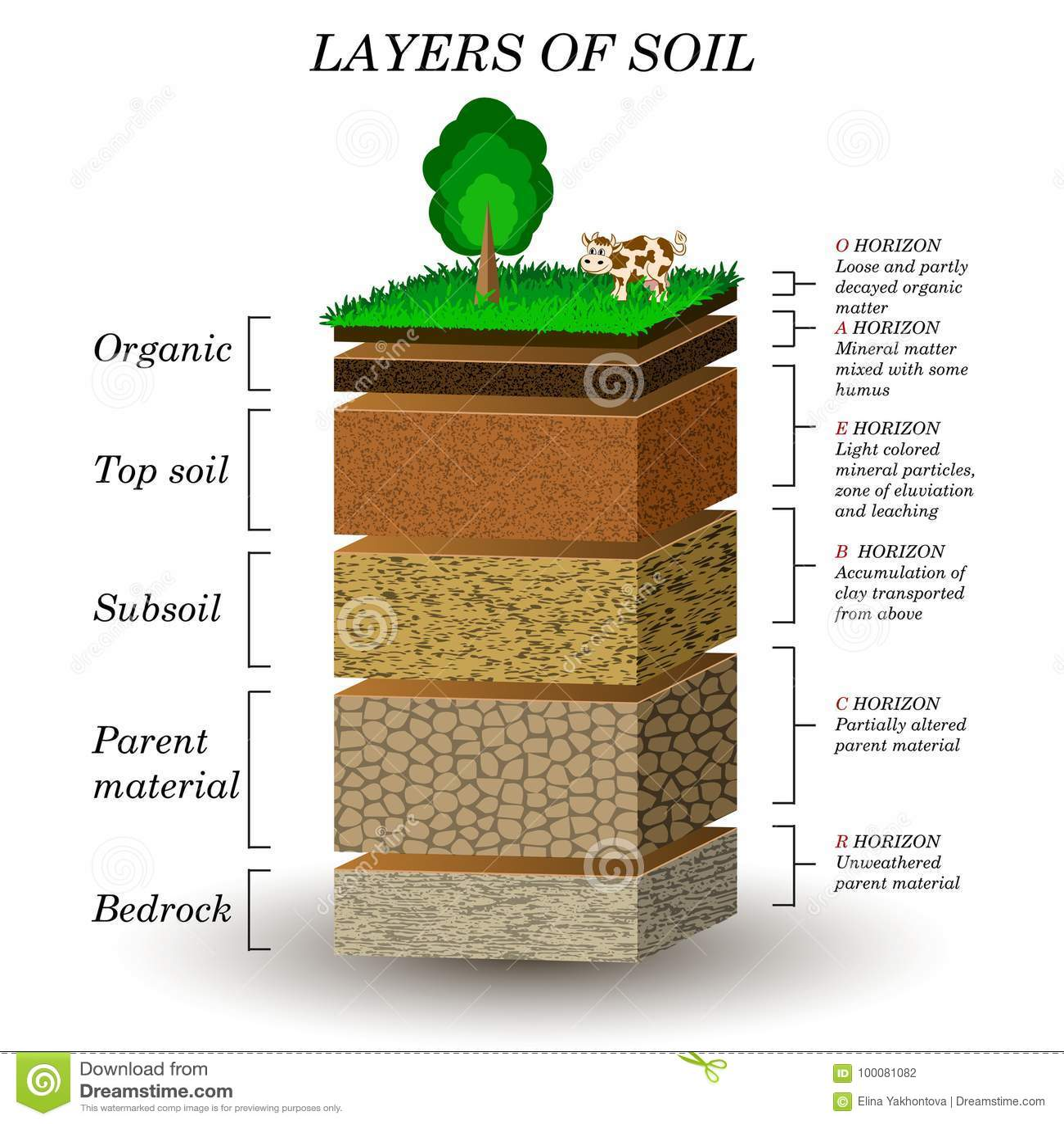 Couches De Sol Diagramme D Education Particules Sable