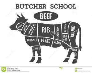 Cow butcher diagram stock vector Illustration of meat