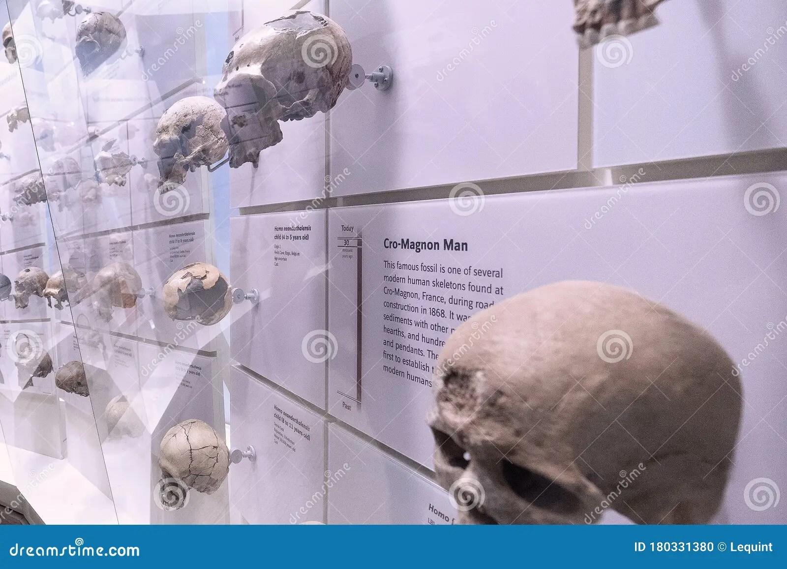 Cro Magnon Man Skulls On Display Editorial Image