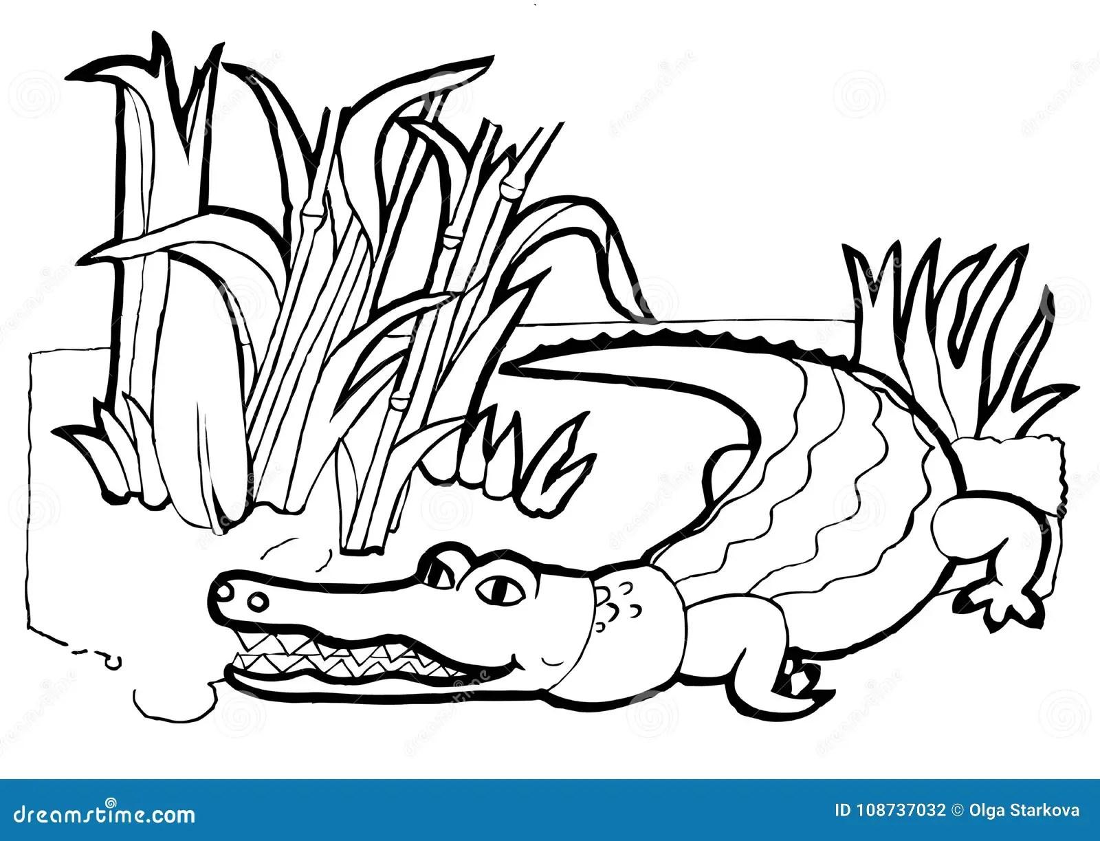 Crocodile Colouring Book Black And White Version Stock