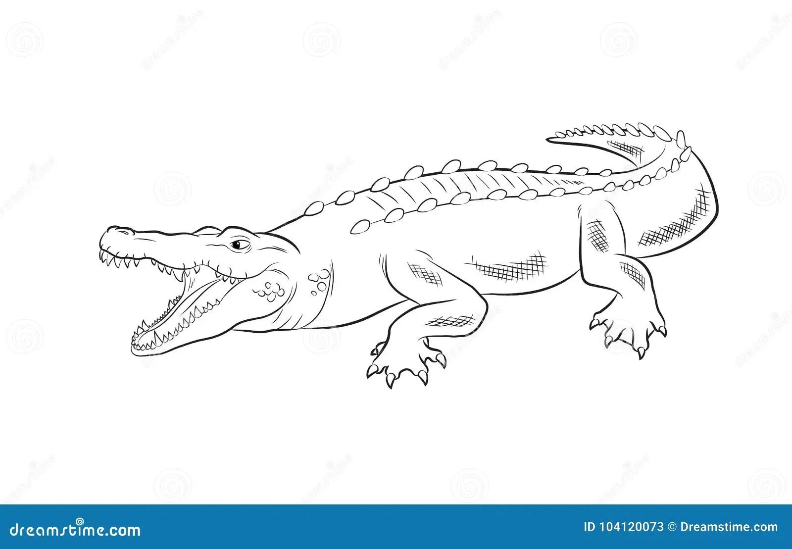 Crocodile Drawing Vector Illustration Stock Vector