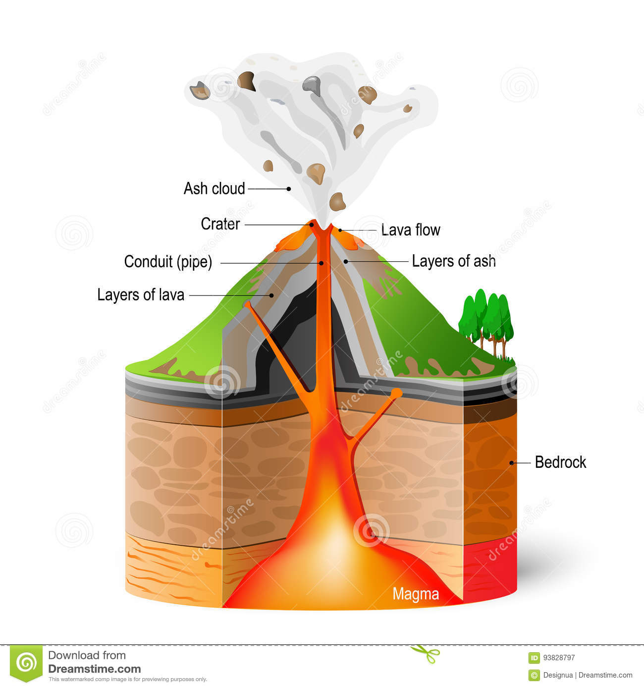 Cross Section Of Volcano Stock Vector Illustration Of