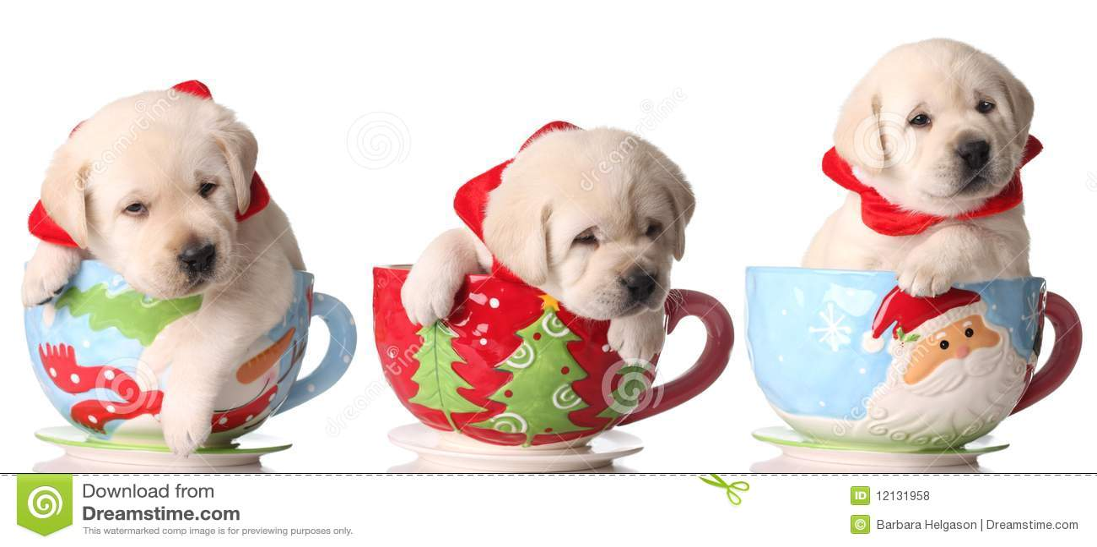 Cuccioli Di Natale Fotografie Stock Libere Da Diritti