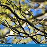 Abstract Close Up Of Twisted Willow Branches Stock Photo Image Of Abstract Leaves 181380818