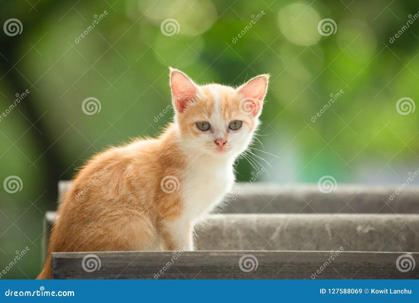 https www dreamstime com cute brown cat tile root bokeh natural background cute cat tile root bokeh natural background image127588069