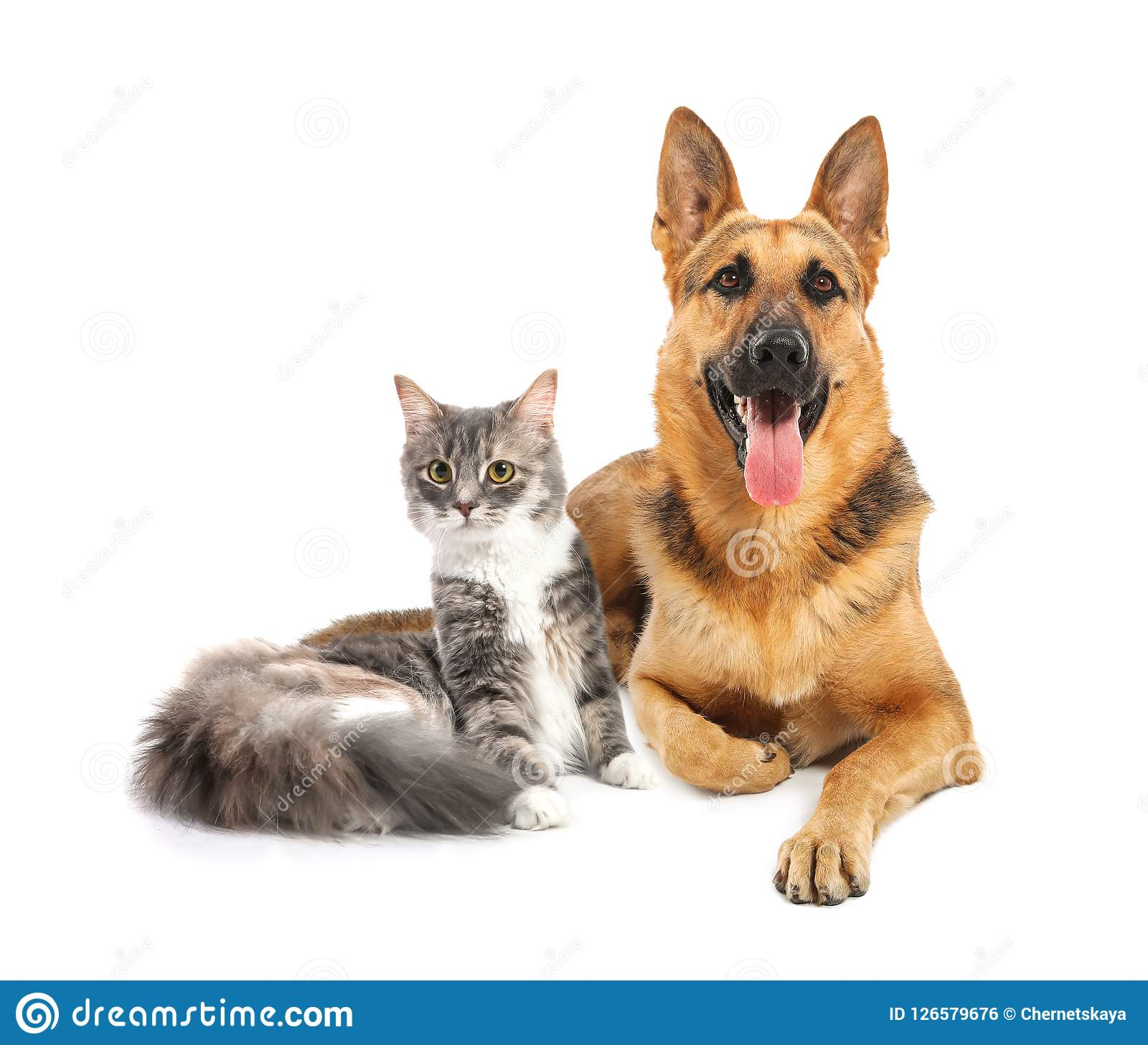 Cute Cat And Dog Together On White Background Stock Photo