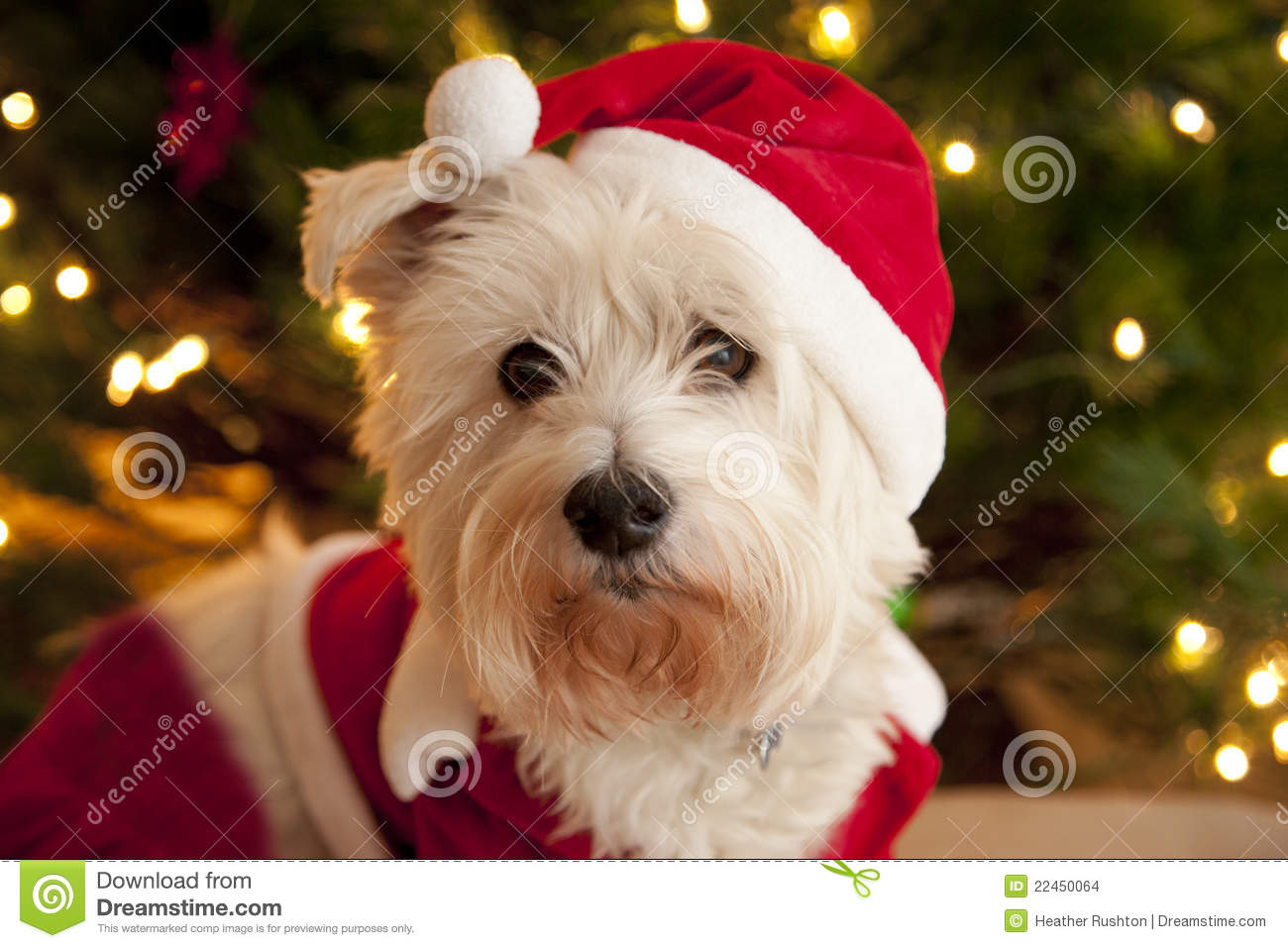 Cute Dog In Santa Suit Stock Images Image 22450064