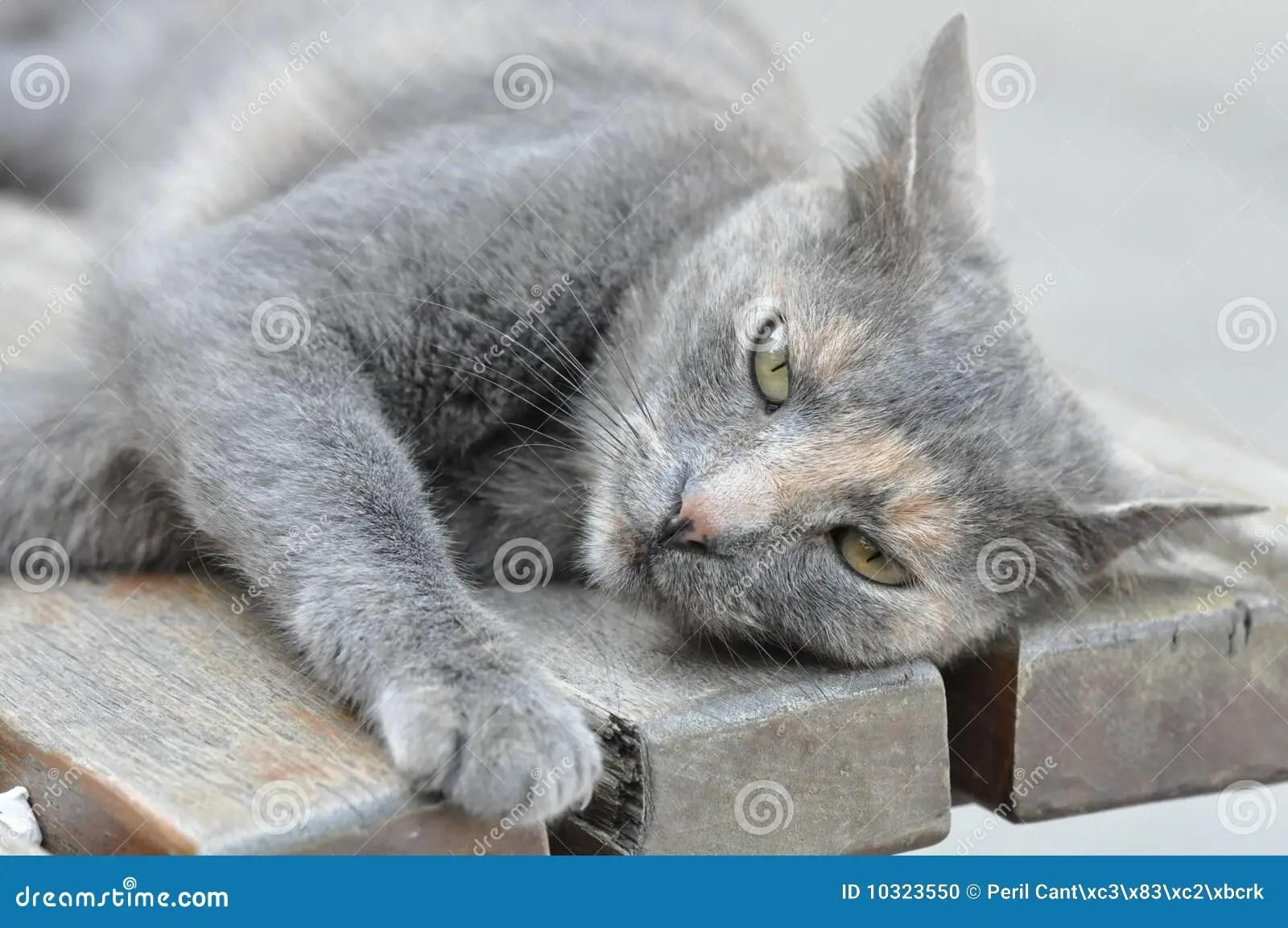 Cute Gray Cat Stock Photo Image Of Bench Single Sleepy