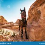 Cute Horse Between Red Rocks Stock Photo Image Of Culture Petra 168610880