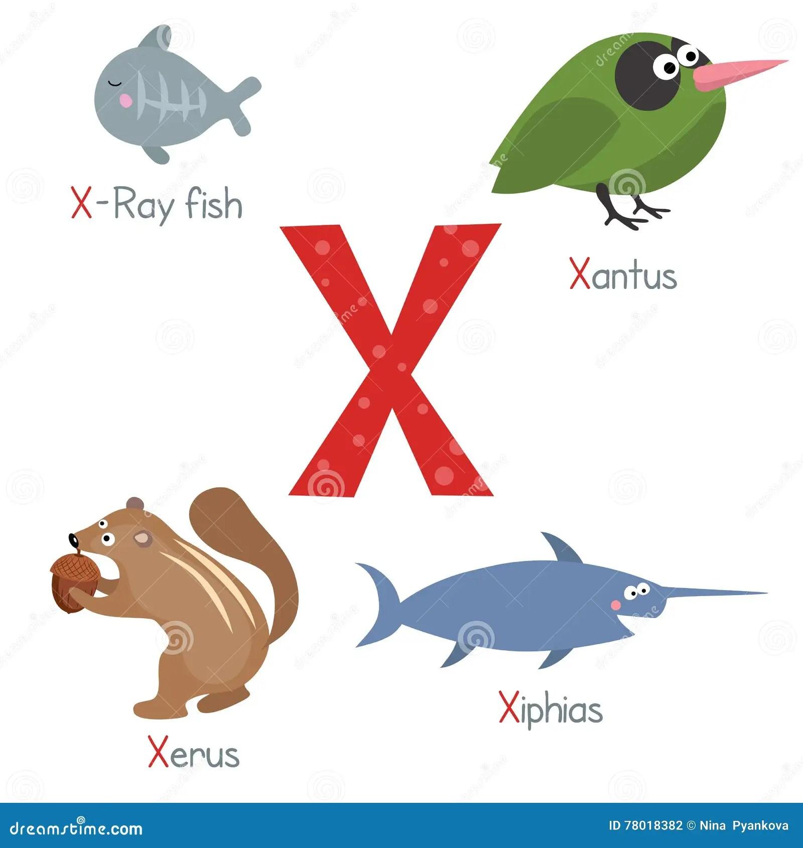 Letter X With Cartoon Xerus Vector Illustration