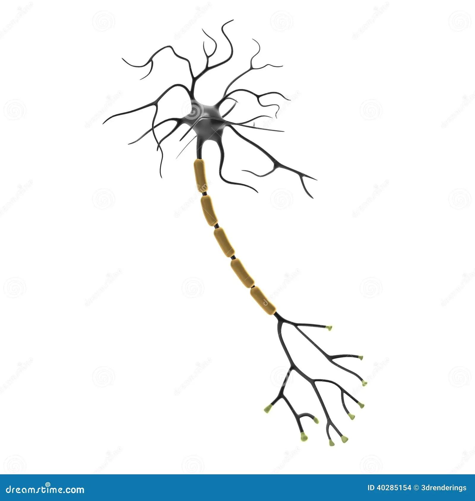 3d Rendent Du Neurone Illustration Stock Illustration Du