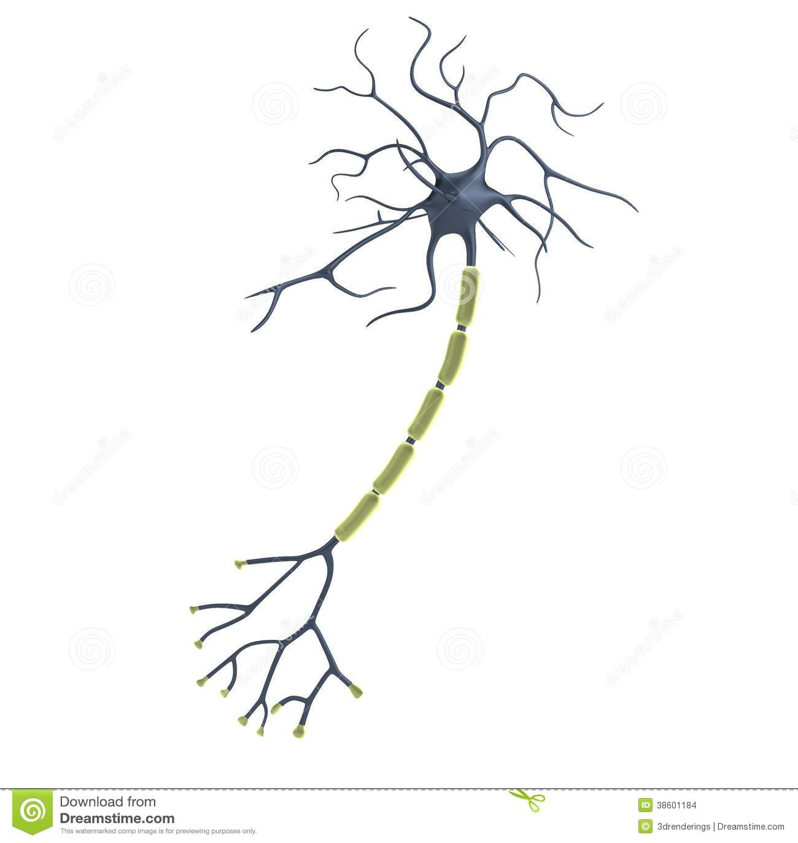 3d Render Of Neuron Stock Illustration Illustration Of