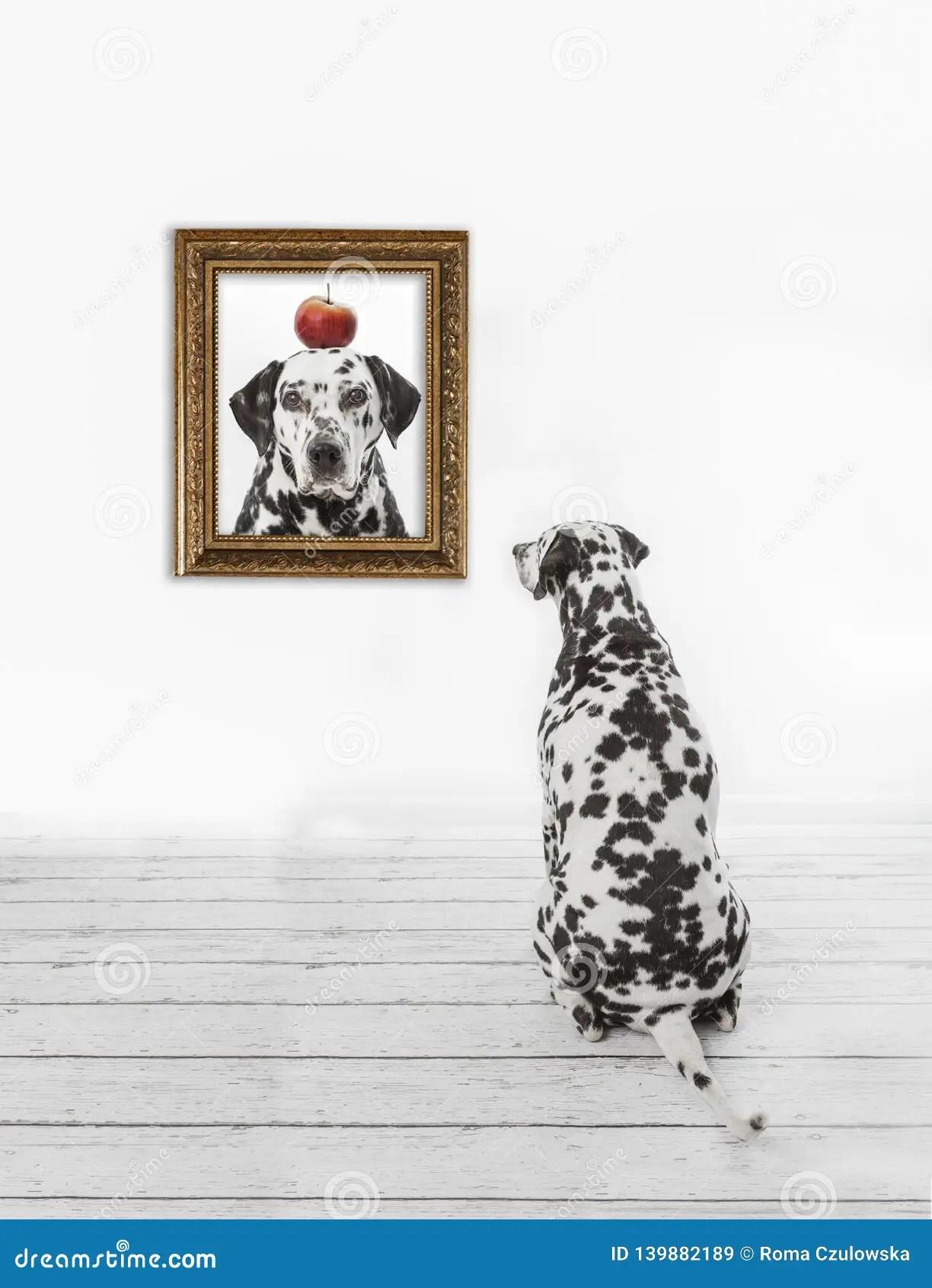 Dalmatian Dog Admiring Self Portrait In Golden Frame On