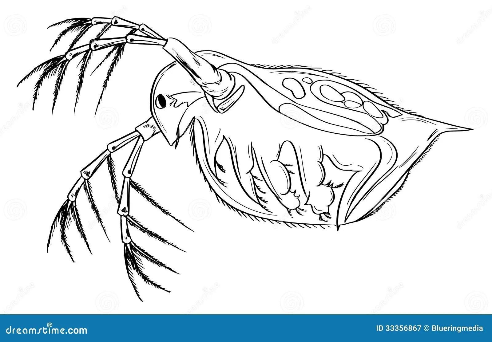 Daphnia Stock Abbildung Illustration Von Abbildung