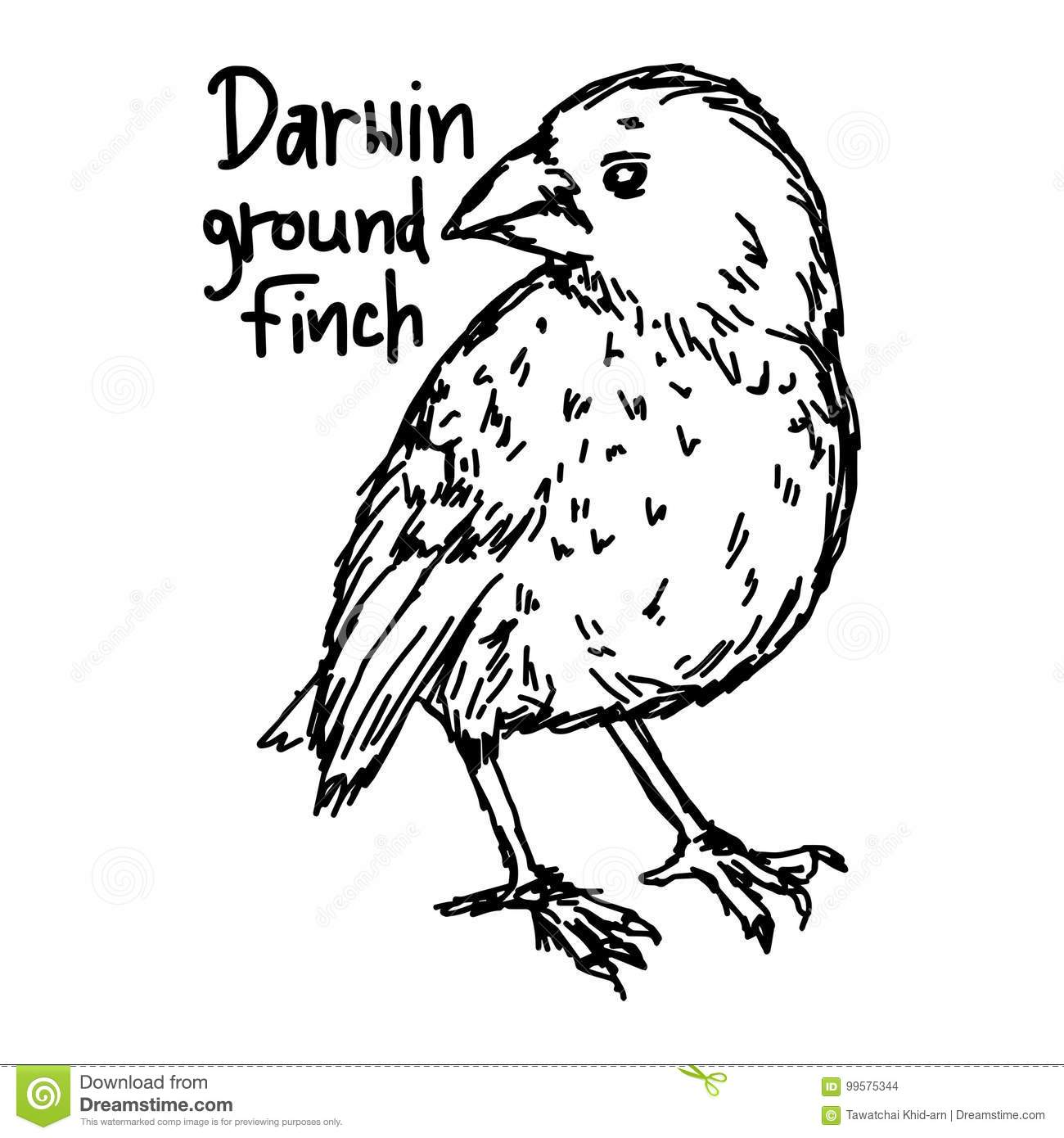 Darwin Ground Finch