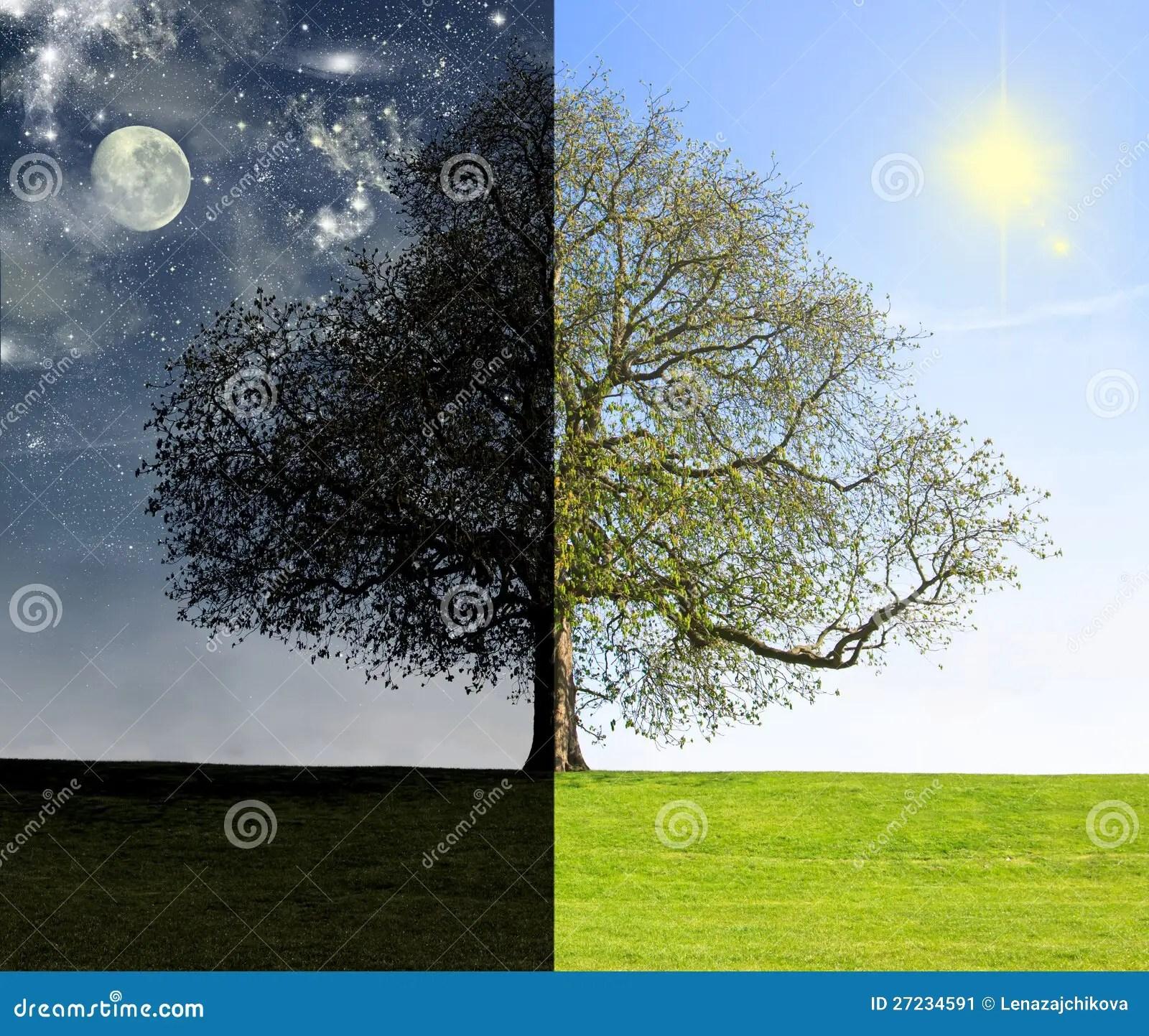 Day Vs Night Tree Concept Stock Image