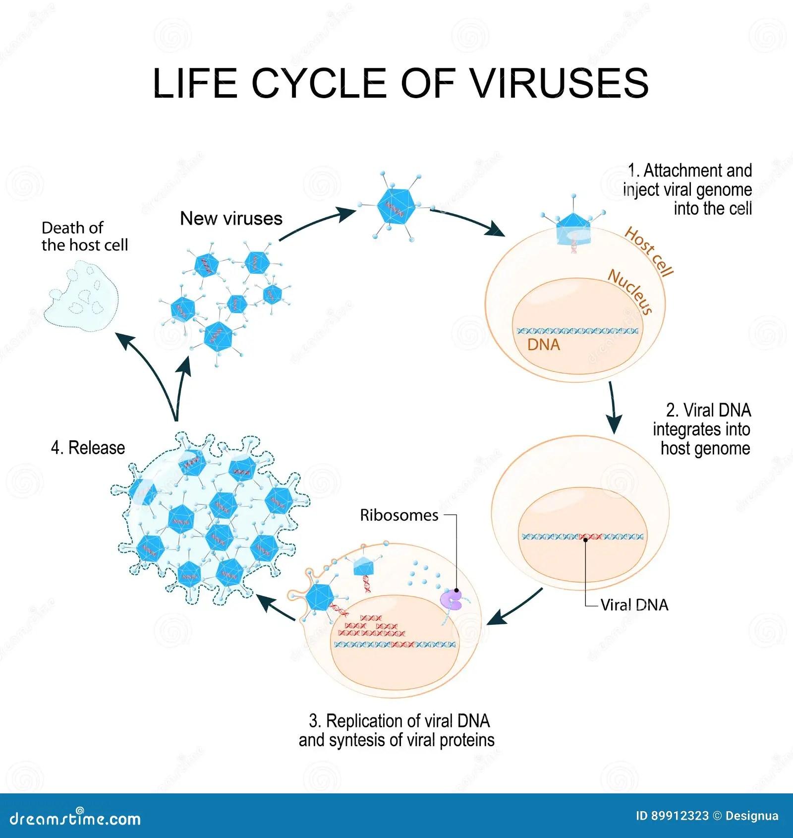 De Cyclus Van De Virusreplicatie Vector Illustratie