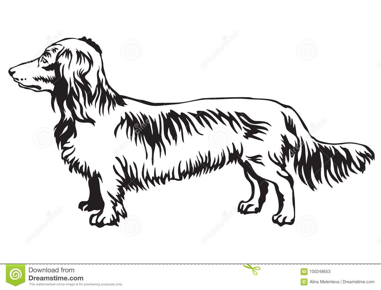 Decorative Standing Portrait Of Dog Long Haired Dachshund