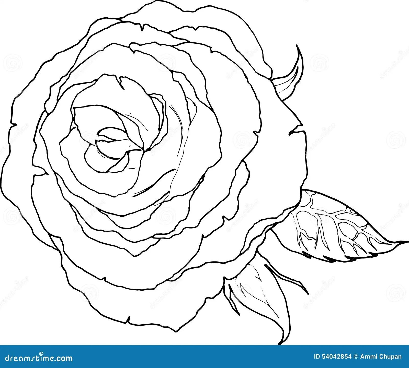 Dessin De Schema D Une Couleur Noire Et Blanche De Fleur