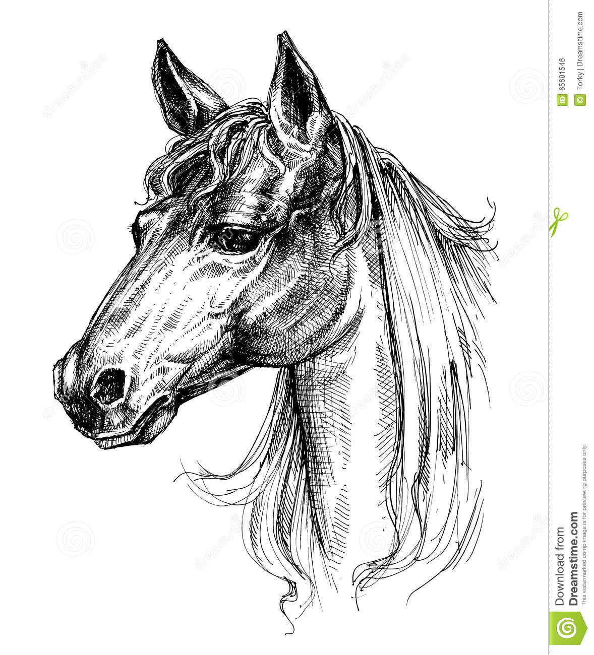 Dessin De Tete De Cheval Illustration De Vecteur