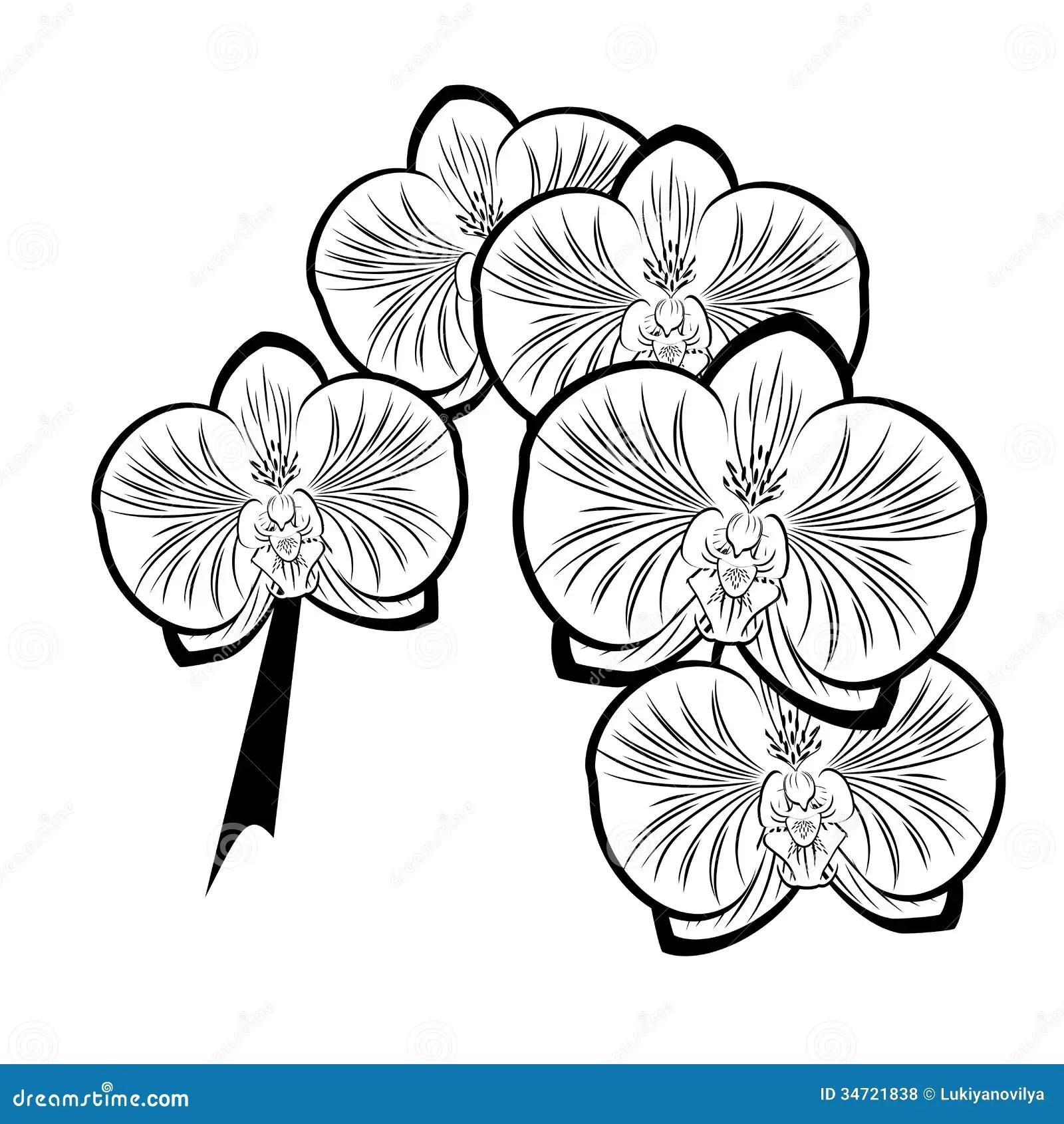 Dessin Noir Et Blanc Des Fleurs D Orchidee Illustration De
