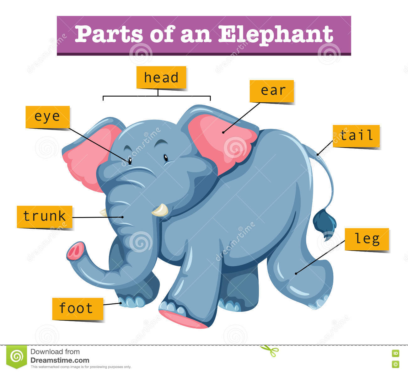 Diagram Showing Parts Of Elephant Stock Vector