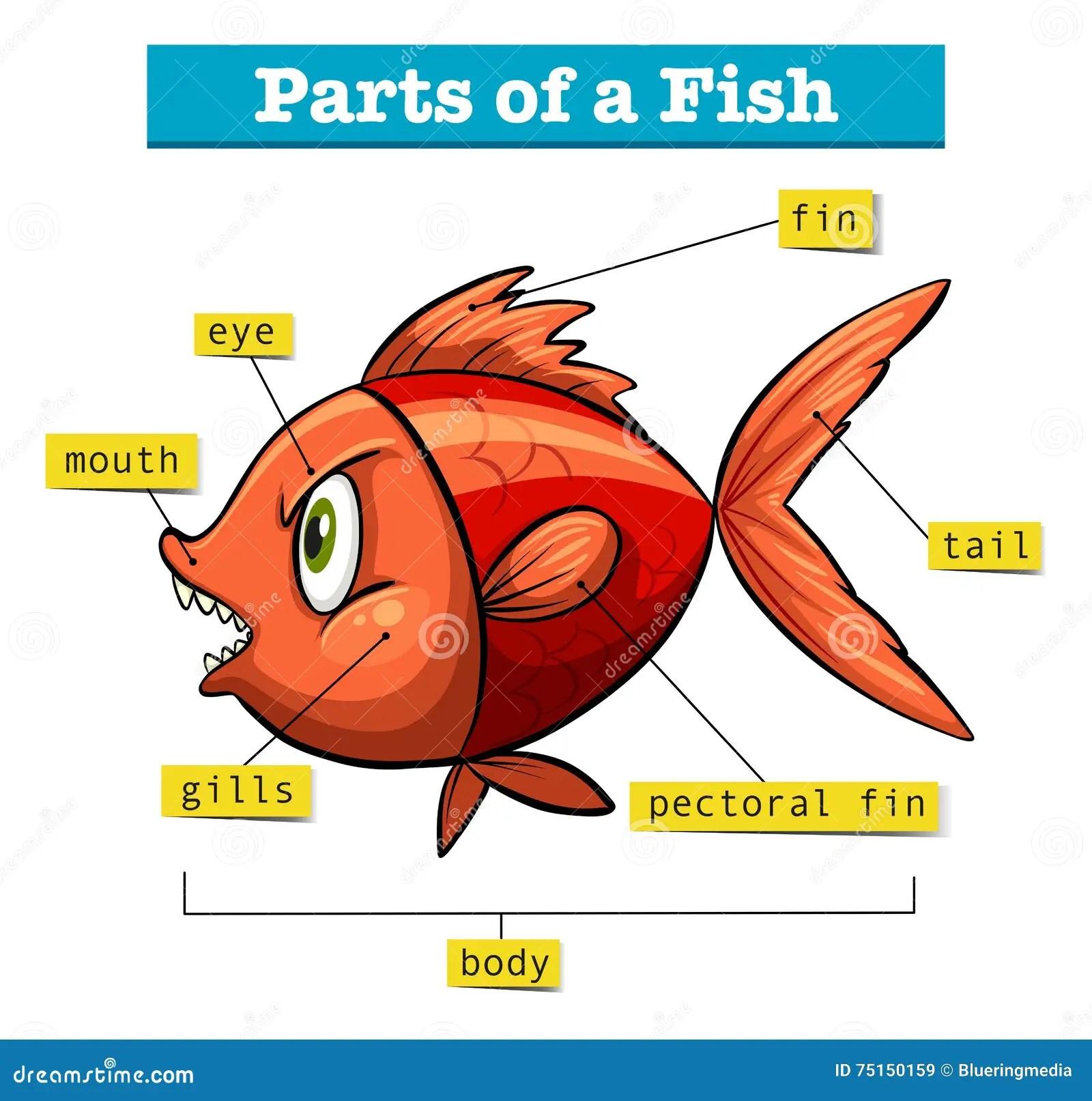 Diagram Showing Parts Of Fish Cartoon Vector