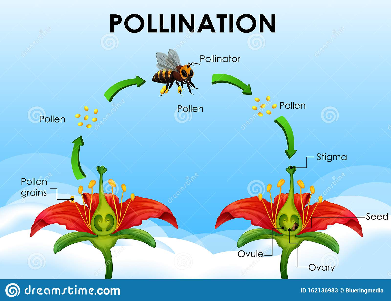 Pollination Cartoons Illustrations Amp Vector Stock Images
