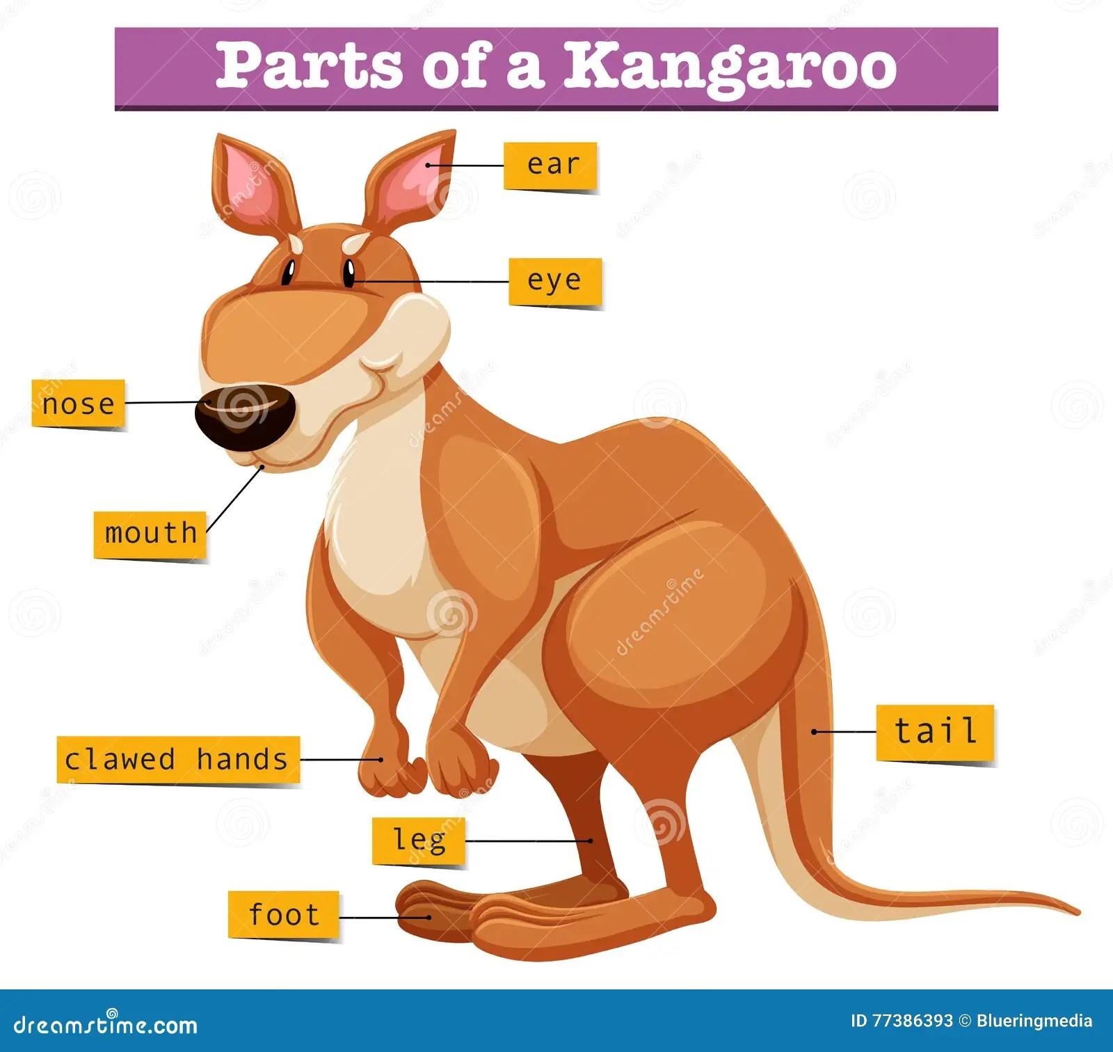 Diagrama Que Muestra Diversas Partes Del Can