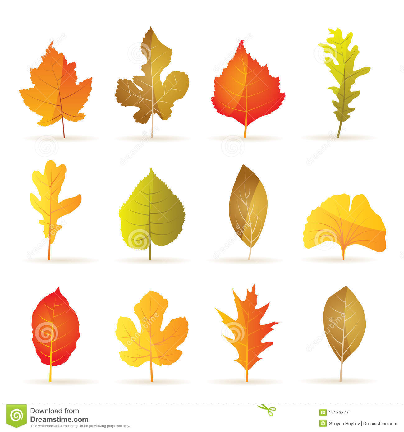 Different Kinds Of Tree Autumn Leaf Icons Royalty Free