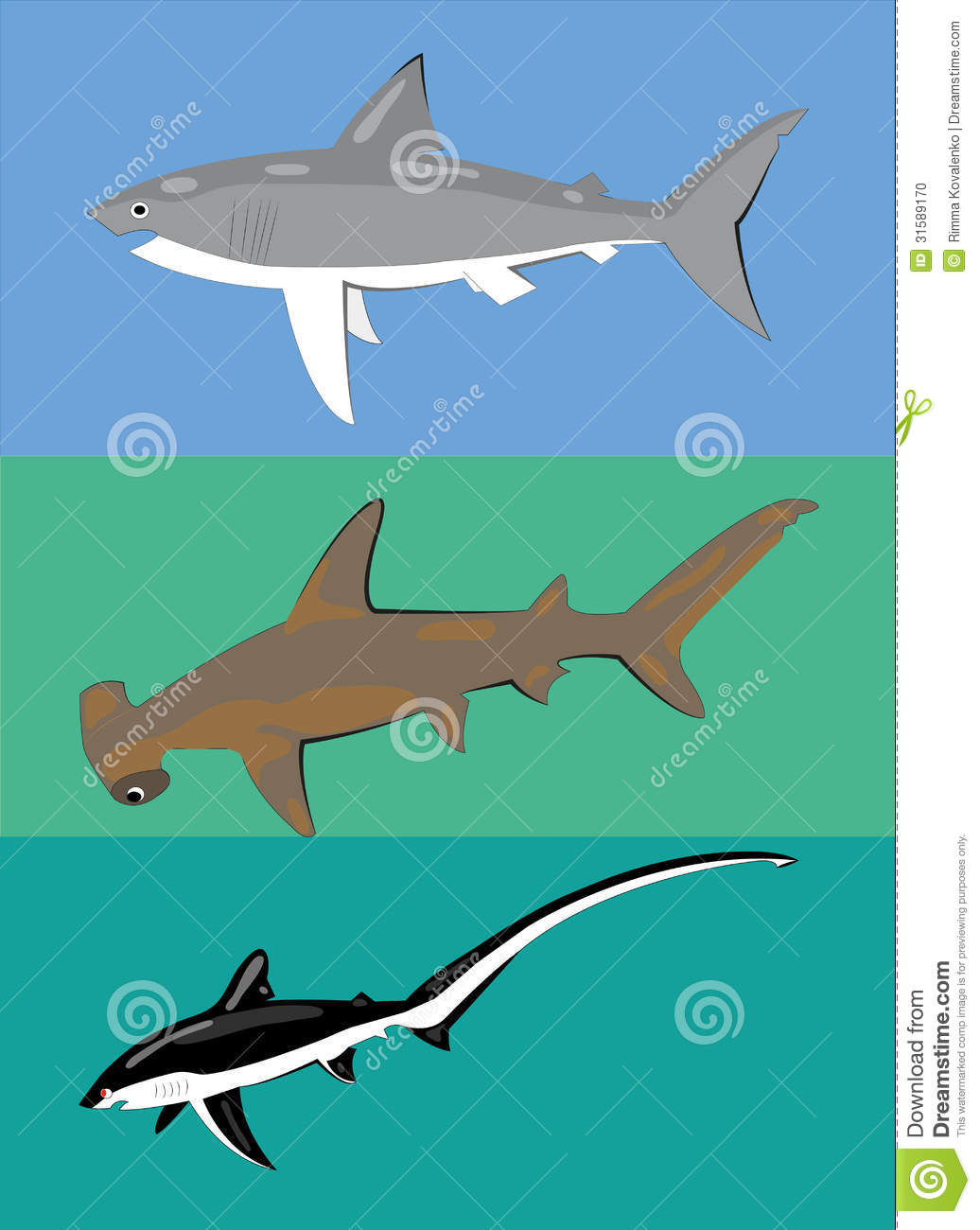 Different Types Of Sharks Stock Vector Illustration Of