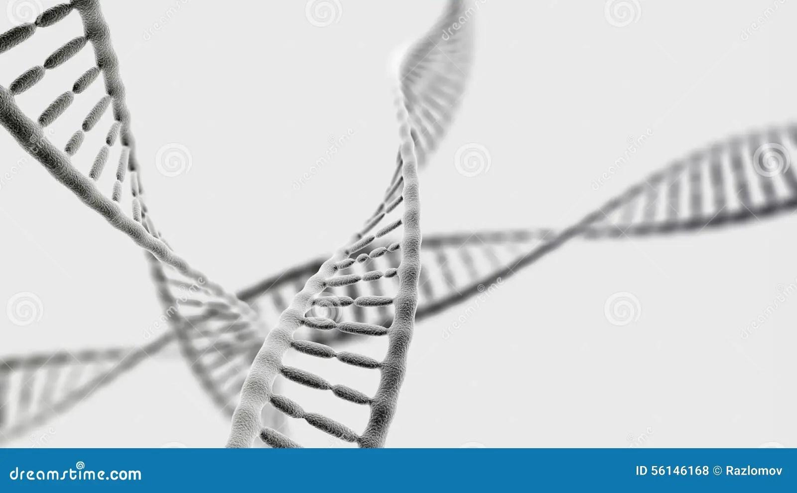 human dna helix