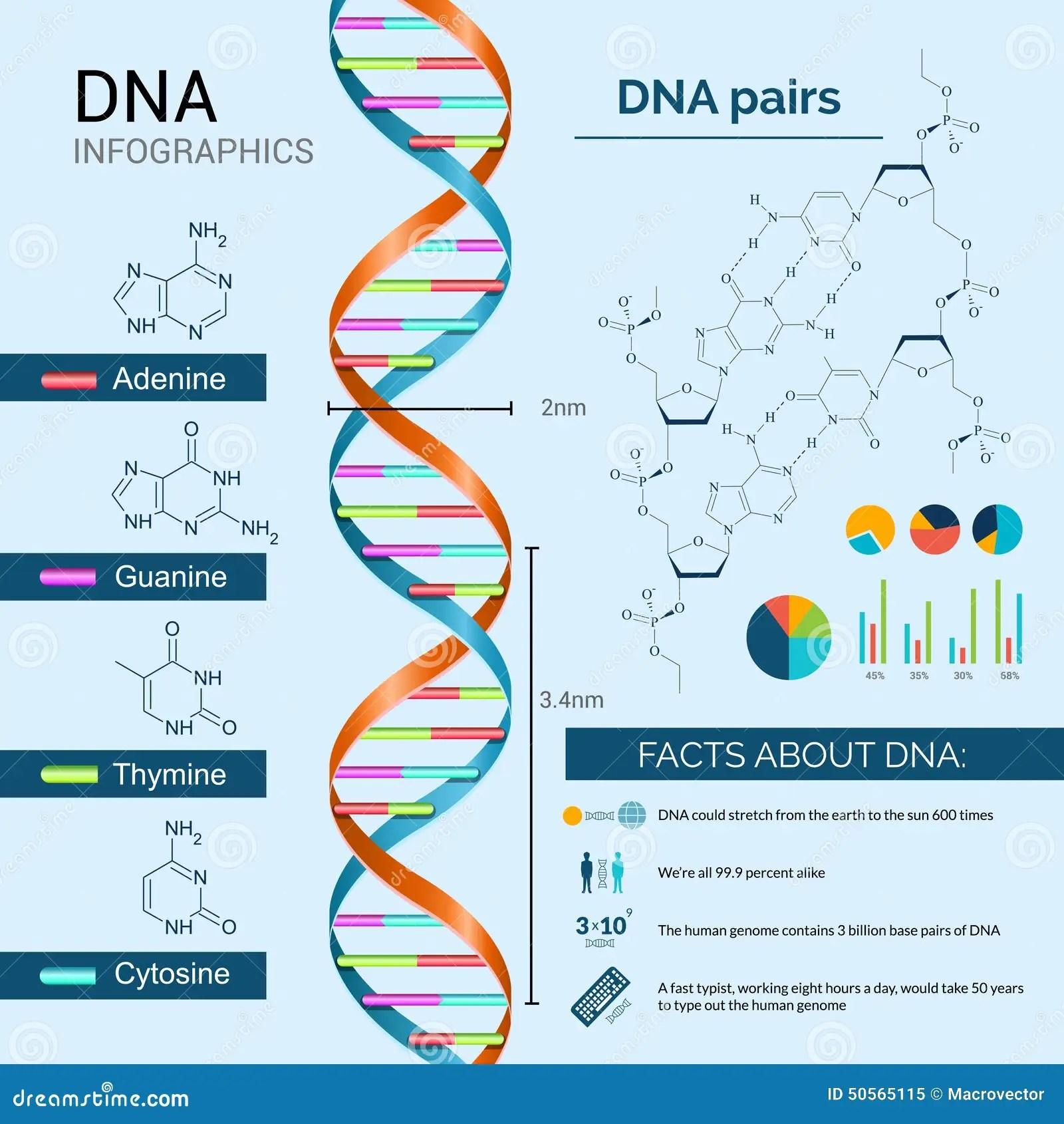 Dna Infographics Set Stock Vector Illustration Of