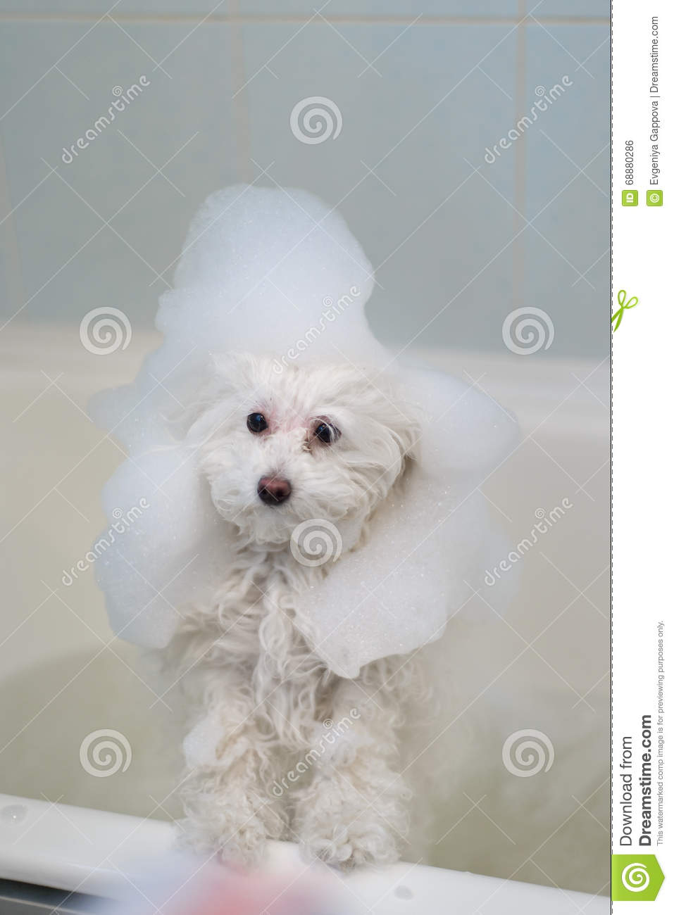 Dog In The Bathroom Stock Photo Image 68880286