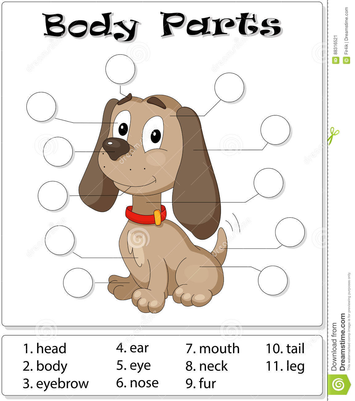 Dog Body Parts Stock Vector Illustration Of English