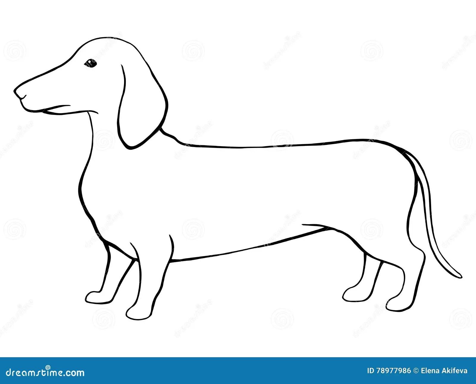Dog Dachshund Graphic Black White Sketch Illustration