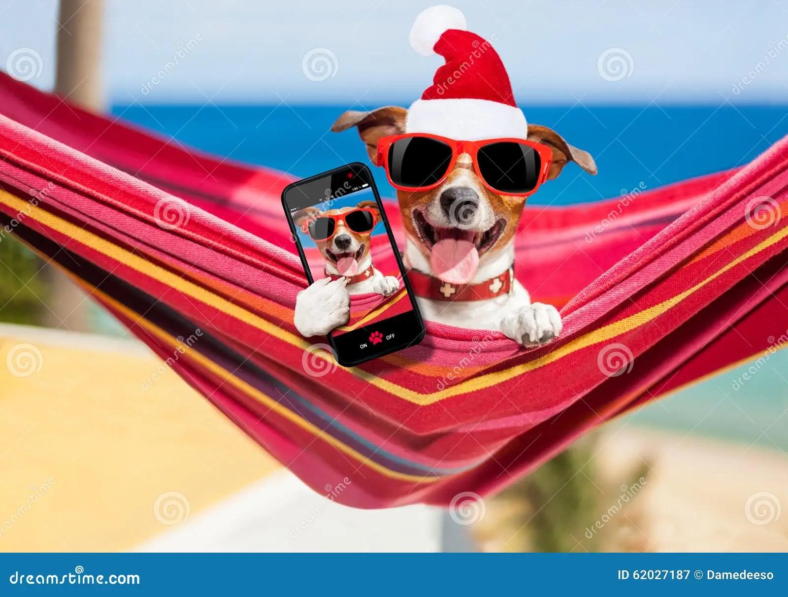 Dog On Hammock At Christmas Stock Photo Image 62027187