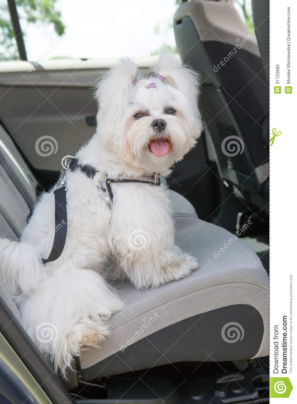 Dog Safe In The Car Stock Image Image Of Lying Inside