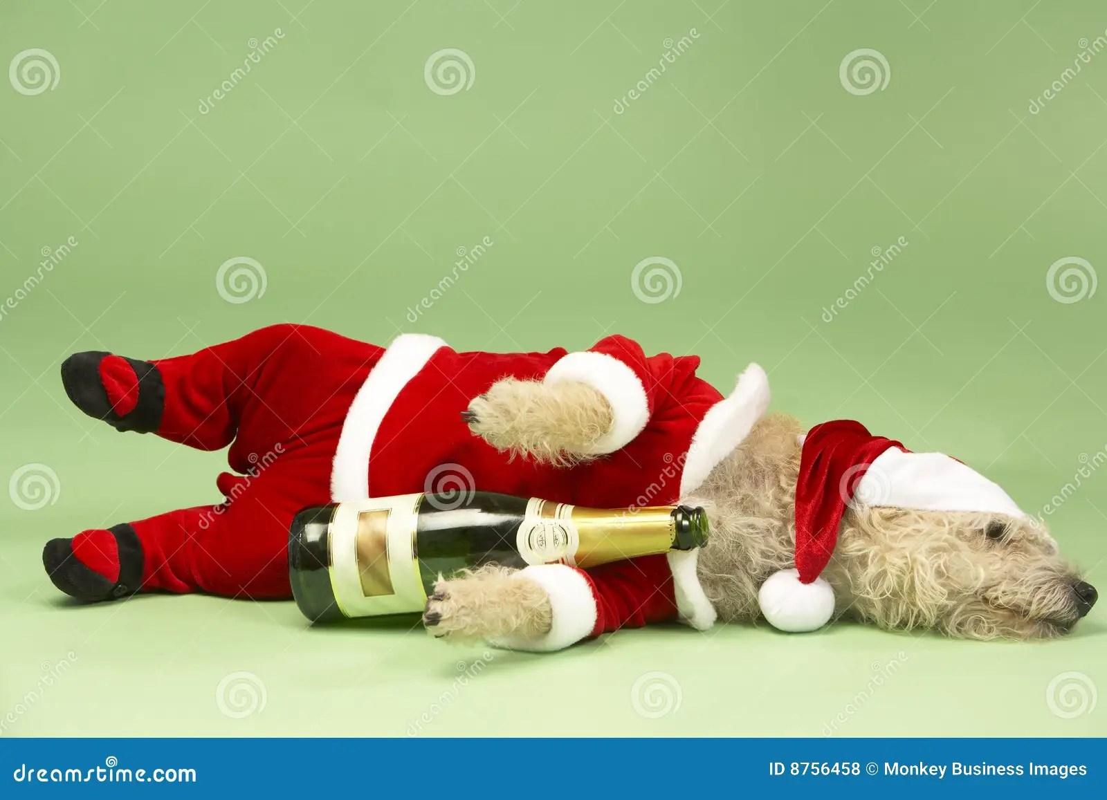 Dog In Santa Costume Stock Photo Image Of Drinking Funny