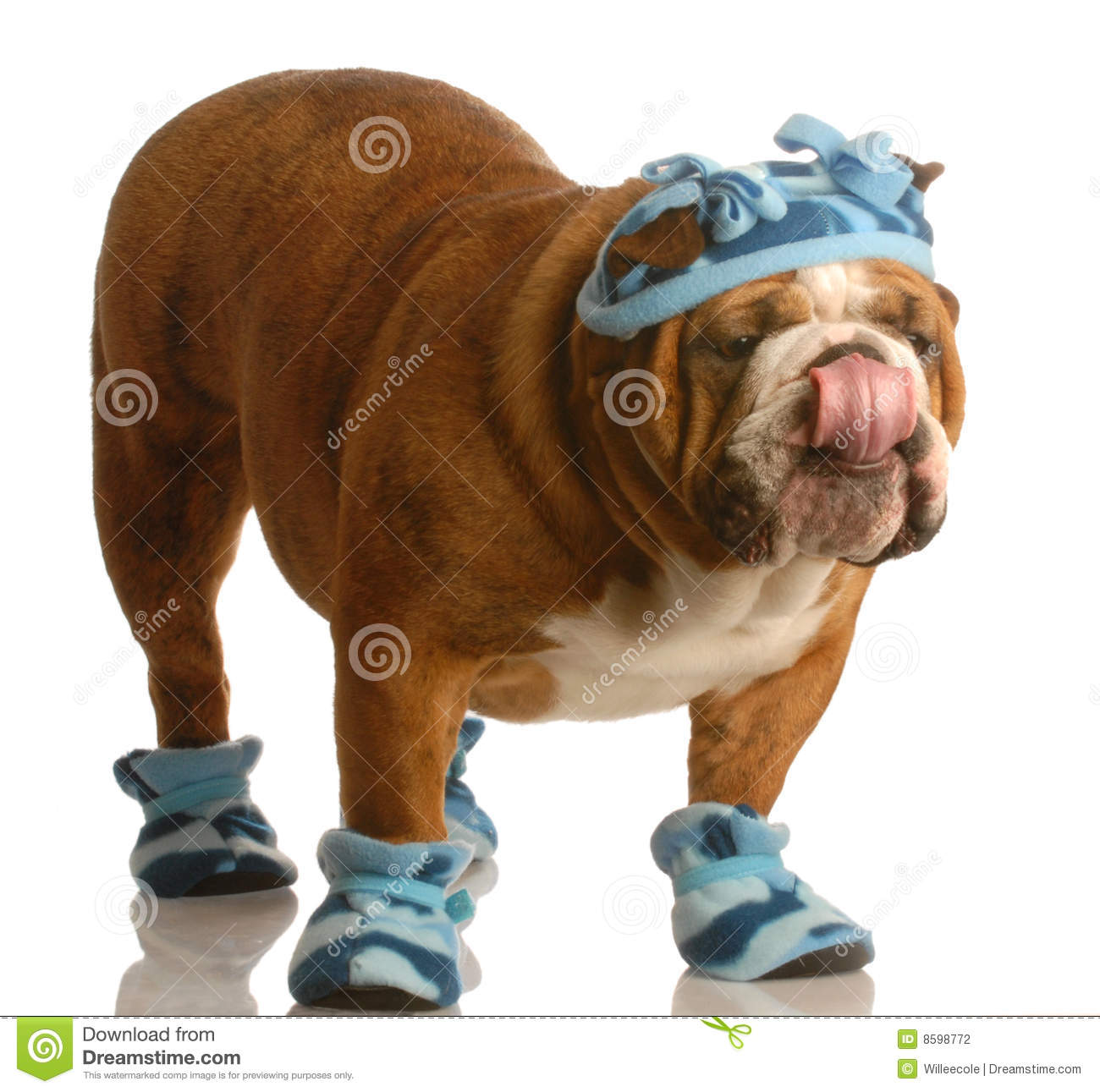 Dog Wearing Winter Hat And Boots Stock Photography Image