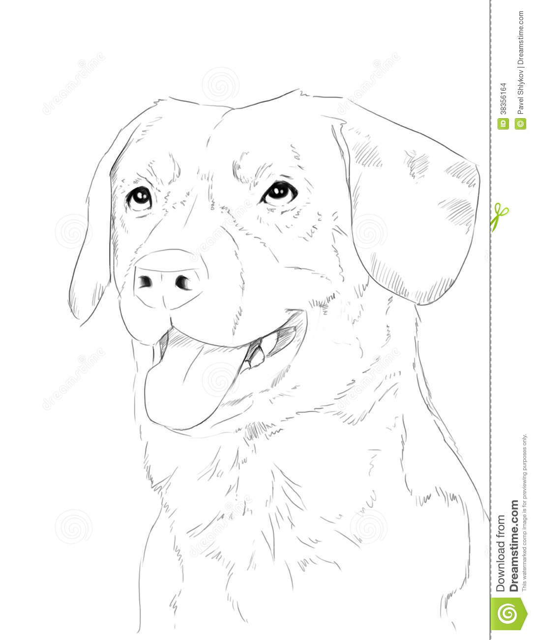 Dogs Portrate Stock Images