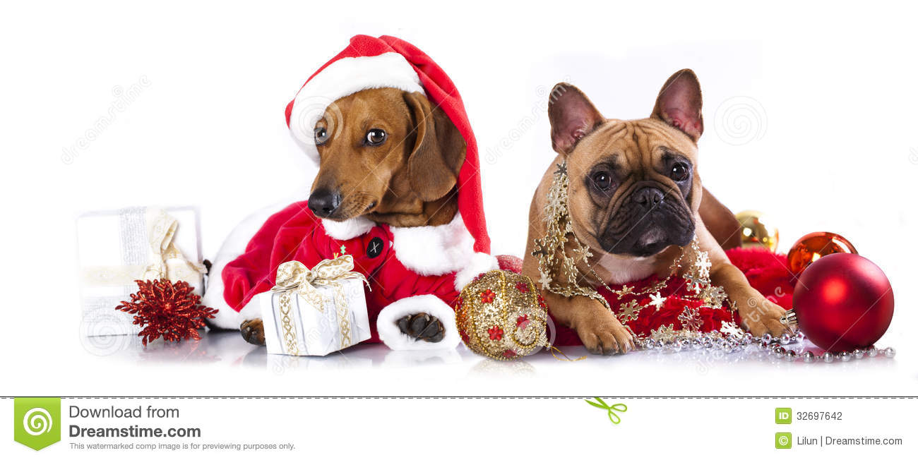 Dogs A Santa Hat Stock Photography Image 32697642