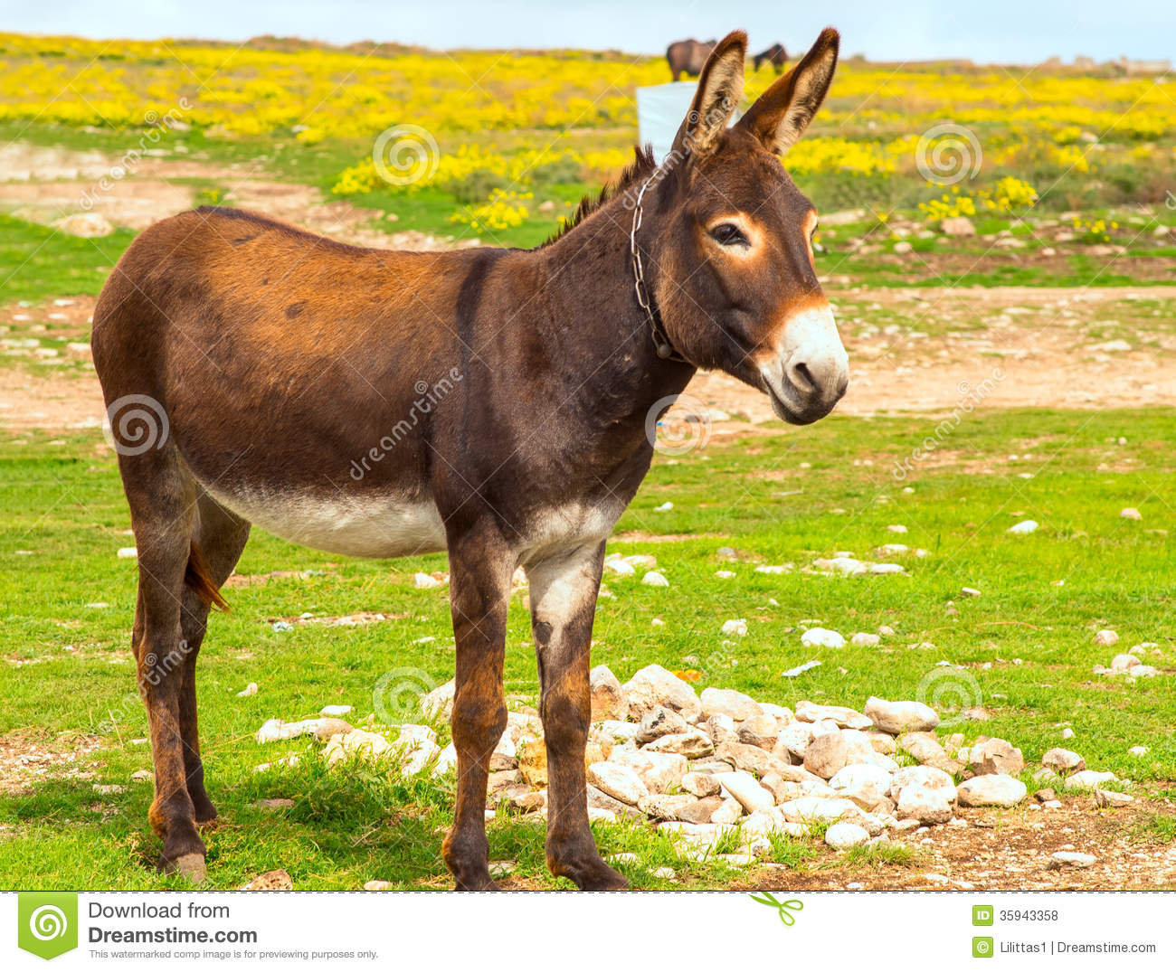 donkey farm animal brown color standing on field grass the donkey or