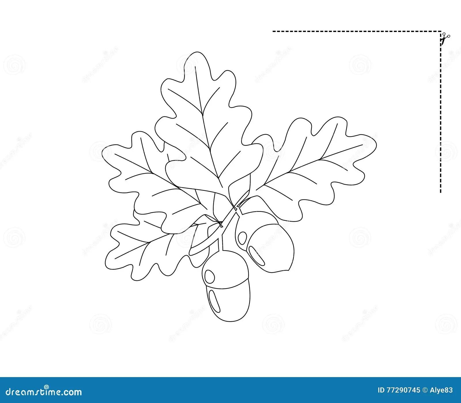 Drawing Acorns Stock Illustration Image Of Black Nature