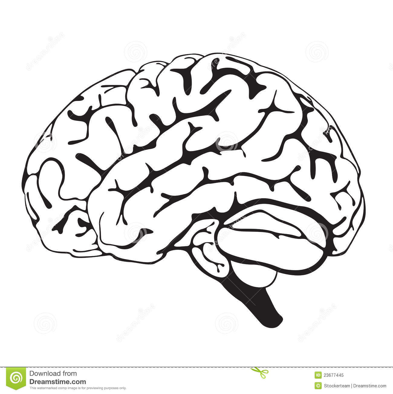 Drawing Brain Closeup Royalty Free Stock Photo